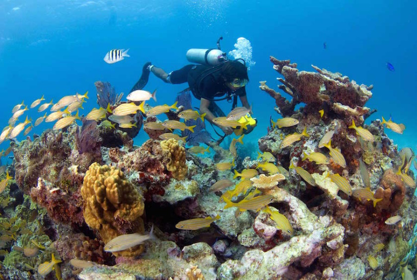 Scuba Diving Mexico – Your One-stop Diving Hub